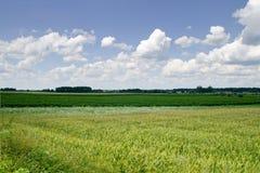 Felder und Wolken Lizenzfreie Stockbilder