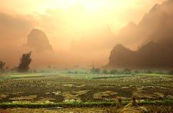 Felder in Vietnam Stockfotografie