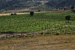 Felder von Burdur Stockbilder