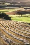Felder von der Queensansicht in Schottland Stockfoto