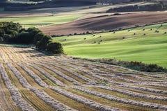 Felder von der Queensansicht in Schottland Stockfotografie