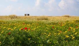 Felder von Frühlingsblumen, Zypern Rote und gelbe Blumen, blauer Himmel und Wolken Lizenzfreie Stockbilder