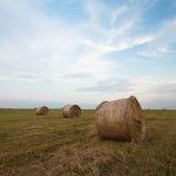 Felder von hayroll Stockbild