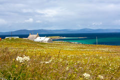 Felder von Iona im inneren Hebrides, Schottland-Schaf auf den Gebieten von Iona im inneren Hebrides, Schottland Lizenzfreie Stockfotografie