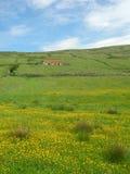 Felder von Irland - Portrait Stockfoto