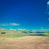 Felder von Sizilien Lizenzfreies Stockbild