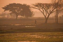 Felder während der Reisjahreszeit Lizenzfreies Stockfoto