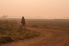 Felder während der Reisjahreszeit Stockfoto