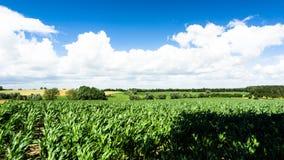 Felder, Wiesen und Wald Stockfoto