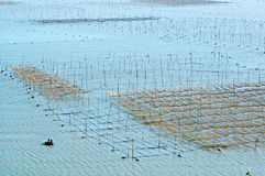 Felder, zum des Purpurtangs zu lüften trocken Lizenzfreie Stockbilder