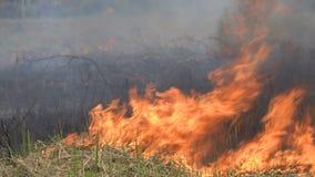 Feldfeuer Burning stock video