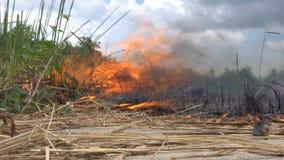 Feldfeuer Burning stock video footage