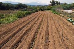 Feldfrüchteernte des organischen Dorfs leeren sich die kleine, die lokal ist, gepflogen, Griechenland lizenzfreies stockfoto