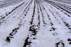 Feldgrundschneewinter Stockfoto