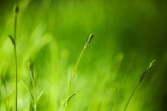 Feldhintergrund des grünen Grases Stockfotos