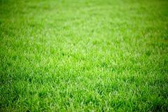 Feldhintergrund des grünen Grases Stockfotografie