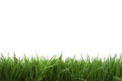 Feldhintergrund mit grünem Gras Stockfotografie