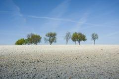 Feldkreide, Bäume und blauer Himmel Lizenzfreies Stockfoto