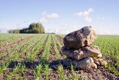 Feldlandschaft des grünen Getreides des Herbstes mit Steinen Stockbild