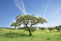 Feldlandschaft mit Bäumen stockfoto