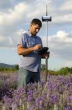 Feldmesser, das auf einem Lavendelgebiet arbeitet Stockfoto