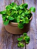 Feldsalat-Blätter stockfotografie