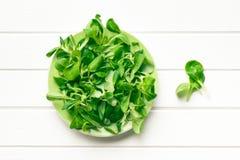 Feldsalat, der Feldsalat lizenzfreies stockbild