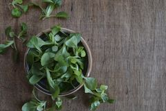 Feldsalatanlage, Locusta Valerianella der Feldsalat, Valerianasalat auf hölzernem Hintergrund lizenzfreie stockbilder