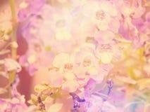 Feldvergissmeinnichtblume mit Filterfarbe Stockbild