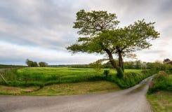 Feldweg in Cornwall Lizenzfreies Stockbild