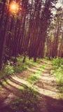 Feldweg in dem Sommerwald Stockfotografie