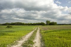 Feldweg durch grünes Korn, Wald und dunklen bewölkten Himmel Lizenzfreies Stockbild