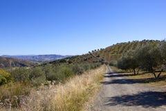 Feldweg durch spanische Olivenhaine in den Hügeln von Andalusien Stockbild