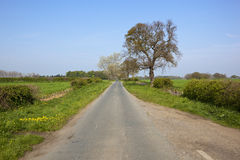 Feldweg im Frühjahr Stockbild