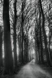 Feldweg mit Bäumen Lizenzfreie Stockbilder