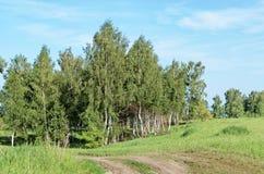 Feldweg unter Birken Lizenzfreies Stockfoto