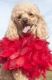 Felice nel colore rosso Fotografia Stock