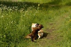 Felices perritos de la queja imágenes de archivo libres de regalías