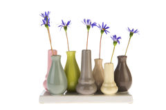 Felicia flowers in little vases Stock Image