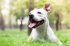 Felicidad del perro fotografía de archivo