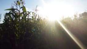 Felicidade da exploração agrícola Imagens de Stock Royalty Free