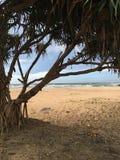 Felicidade da praia Imagem de Stock Royalty Free