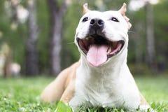 Felicidade do cão fotografia de stock