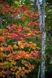 Felicidade do outono Fotografia de Stock Royalty Free