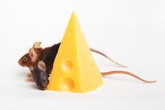 Felicidade do rato Imagem de Stock