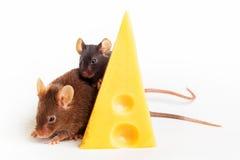 Felicidade do rato Fotos de Stock Royalty Free