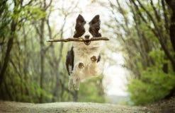 Felicidade pura Fotos de Stock