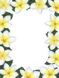 Felicitações botânicas da decoração do projeto do convite do cartão da decoração das decorações das ilustrações da aquarela dos t fotos de stock