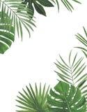 Felicitações botânicas da decoração do projeto do convite do cartão da decoração das decorações das ilustrações da aquarela dos t fotografia de stock royalty free
