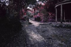 Felik bana för färg på en magisk skog royaltyfri foto